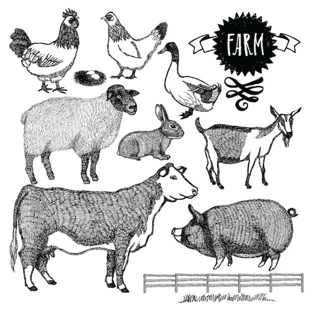 Conjunto orgânico de animais de fazenda Vetor grátis