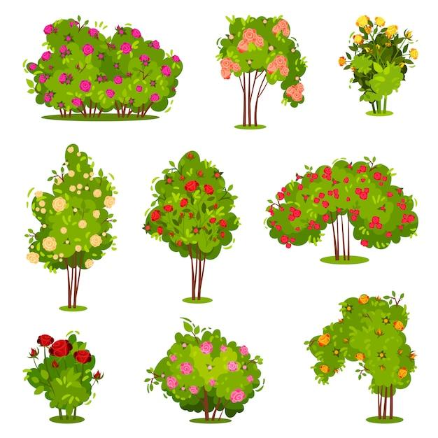 Conjunto plano de arbustos de rosas. arbustos verdes com lindas flores. plantas de jardim. elementos da paisagem natural Vetor Premium