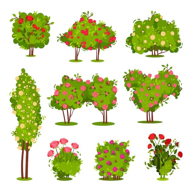Conjunto plano de arbustos de rosas. plantas de jardim com flores. arbustos verdes com lindas flores. elementos da paisagem Vetor Premium