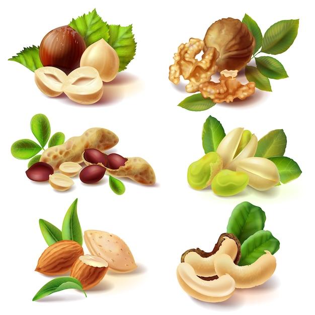 Conjunto real de frutos secos Vetor grátis