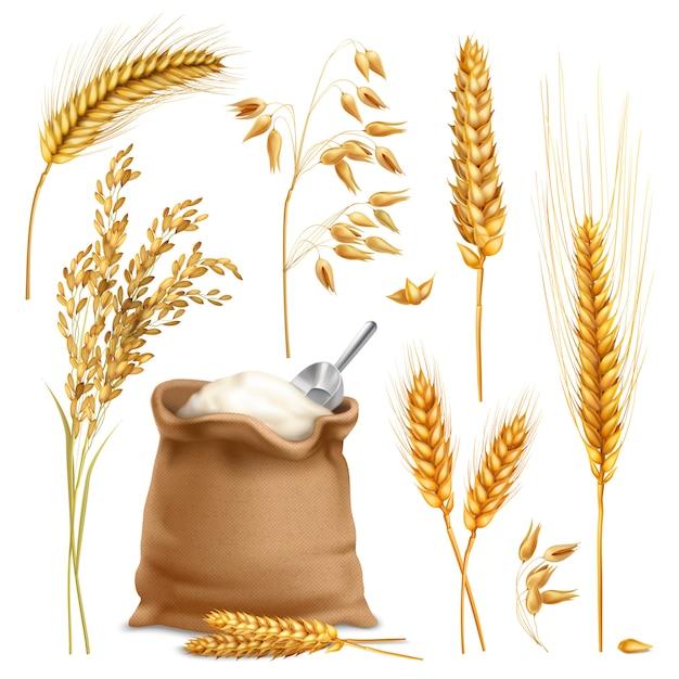 Conjunto realista de culturas agrícolas Vetor grátis