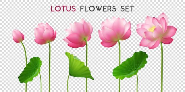 Conjunto realista de flores de lótus Vetor grátis