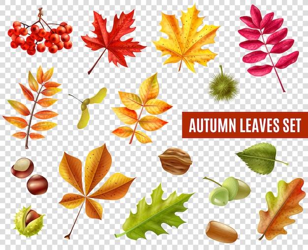 Conjunto transparente de folhas de outono Vetor grátis