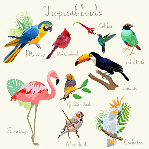Cor brilhante pássaros tropicais exóticos conjunto isolado Vetor Premium