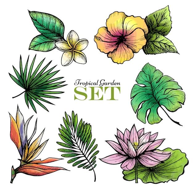 Cor de folhas tropicais definido Vetor grátis