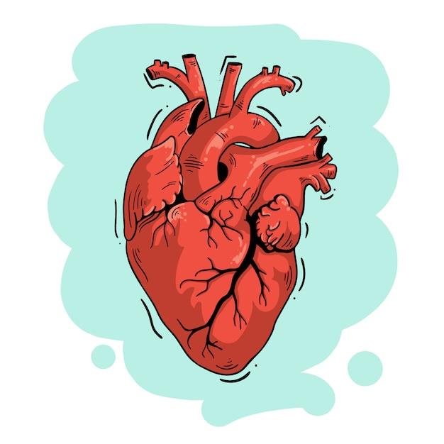 Coração anatômico de ilustração vetorial Vetor Premium