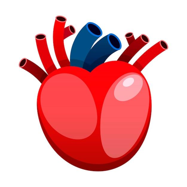 Coração vermelho isolado no vetor de fundo branco Vetor Premium