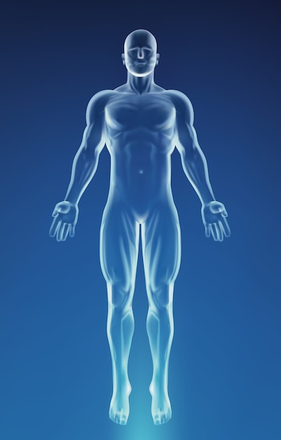 Corpo de anatomia humana azul Vetor Premium