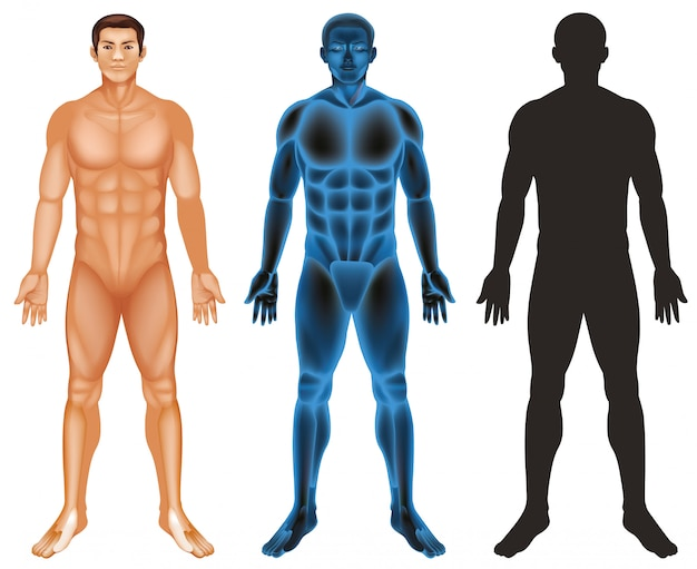 Corpo humano Vetor grátis