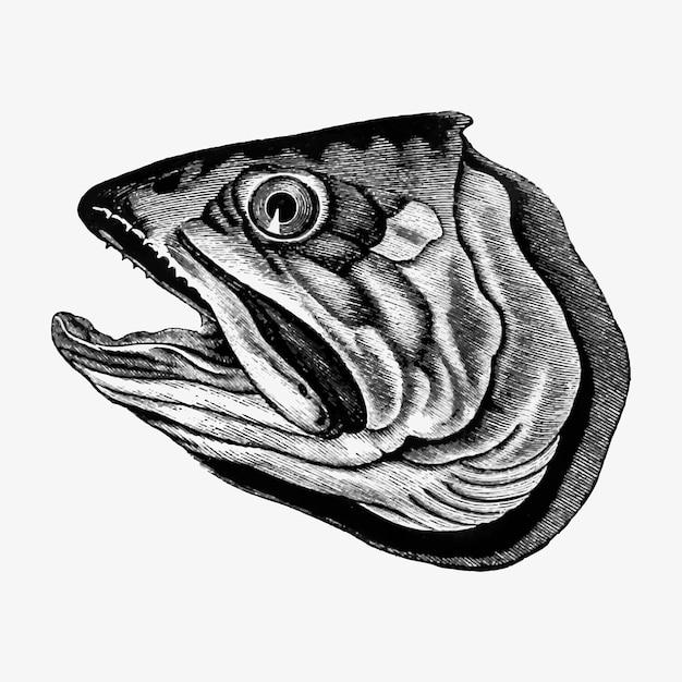 Cortar cabeça de peixe Vetor grátis