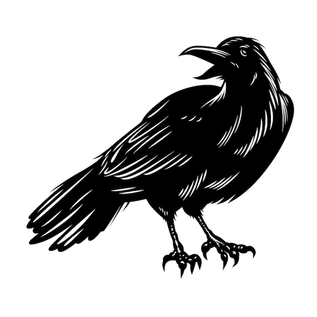 Corvo preto isolado no branco Vetor grátis