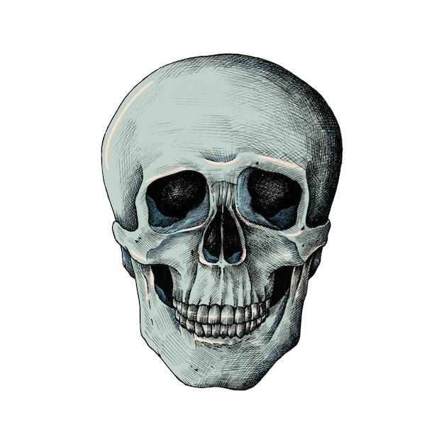 Crânio humano desenhado de mão isolado Vetor grátis
