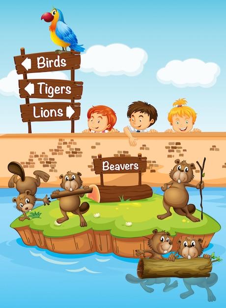 Crianças, olhar, castores, jardim zoológico Vetor grátis