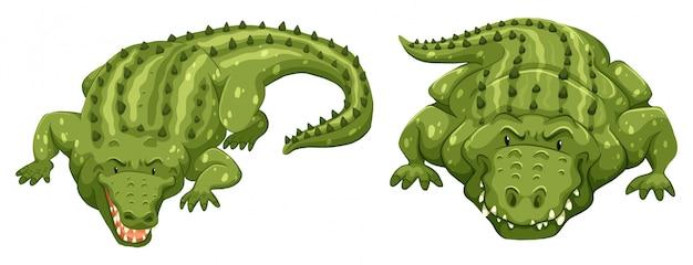 Crocodilos Vetor grátis