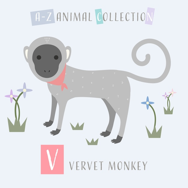 Cute vervet monkey cartoon doodle alfabeto animal v Vetor Premium