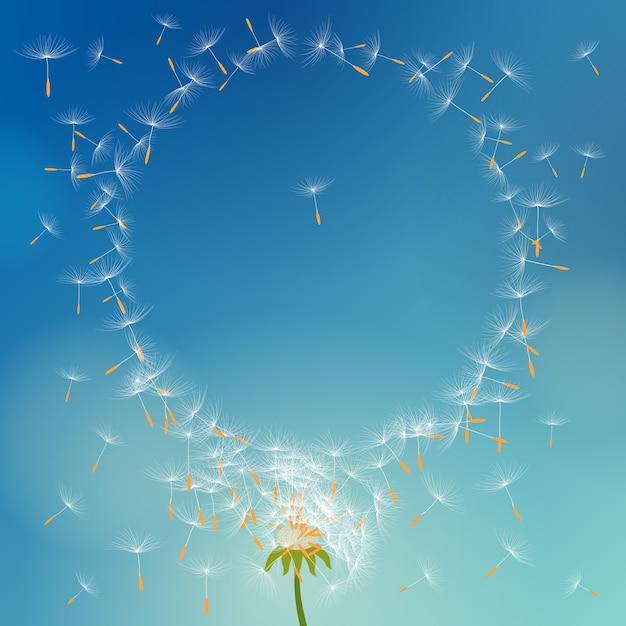 Dente de leão de vetor com sementes voando para longe com o vento formando moldura redonda Vetor Premium
