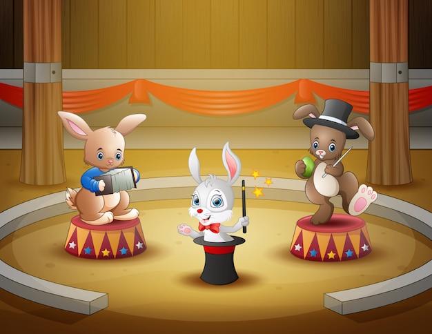 Desempenho de circo de coelhos dos desenhos animados na arena Vetor Premium
