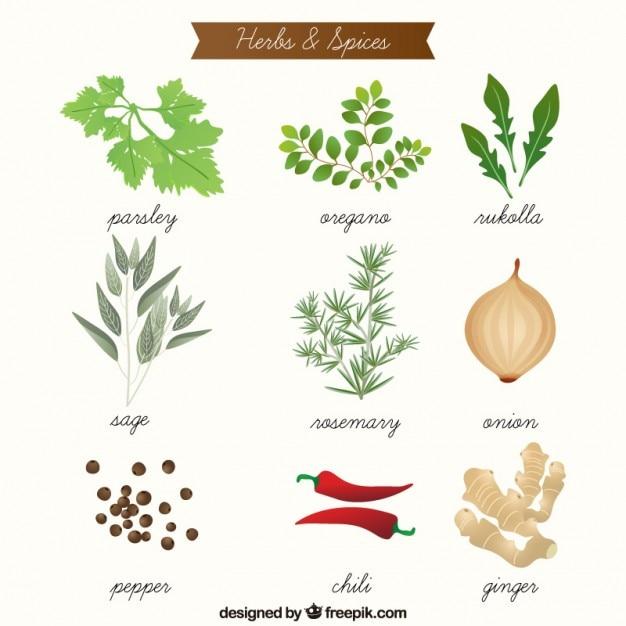 Desenhadas mão ervas aromáticas e especiarias coleção Vetor Premium