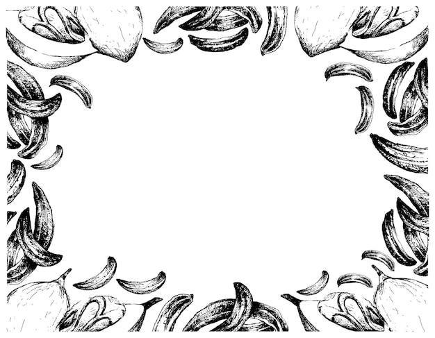 Desenhado à mão de cominho com moldura de frutas de noz-moscada Vetor Premium