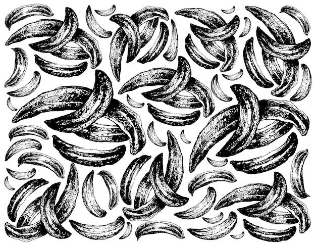 Desenhado à mão de cominho seco em fundo branco Vetor Premium