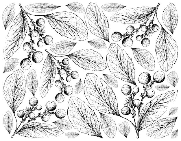 Desenhado à mão de frutas de laranjeira em fundo branco Vetor Premium