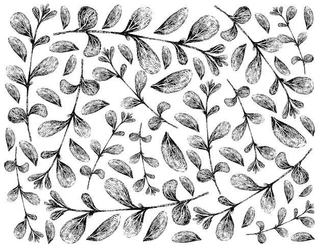 Desenhado à mão de fundo de plantas frescas de manjerona Vetor Premium