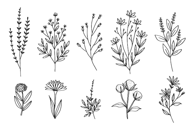 Desenho à mão com coleção de ervas e flores Vetor Premium