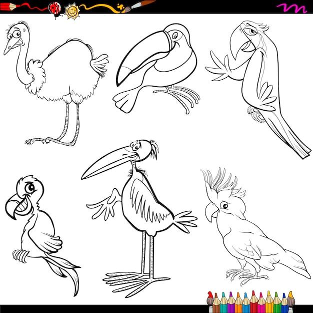 Desenho Animador De Passaros Para Colorir Vetor Premium
