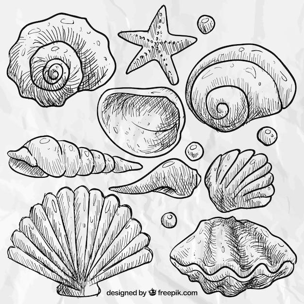 Desenho conchas Vetor grátis