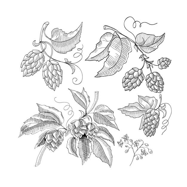 Desenho decorativo de raminho de lúpulo com brotos e folhas ilustração de desenhos animados desenhados à mão Vetor grátis