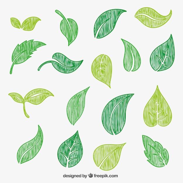 desenho folhas verdes baixar vetores gr u00e1tis vector hand signs vector handheld light