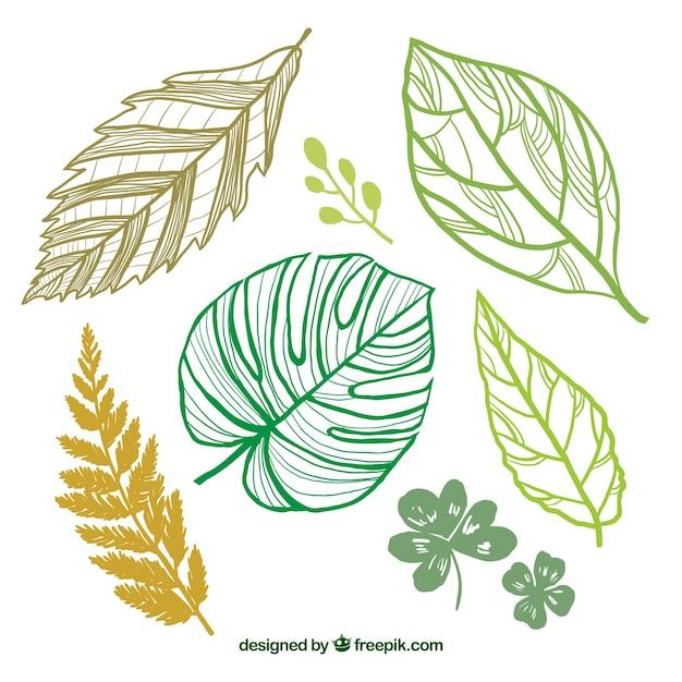 Desenho Folhas Verdes Vetor Gratis