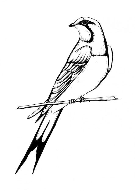Desenho Preto E Branco De Andorinha Vetor Premium