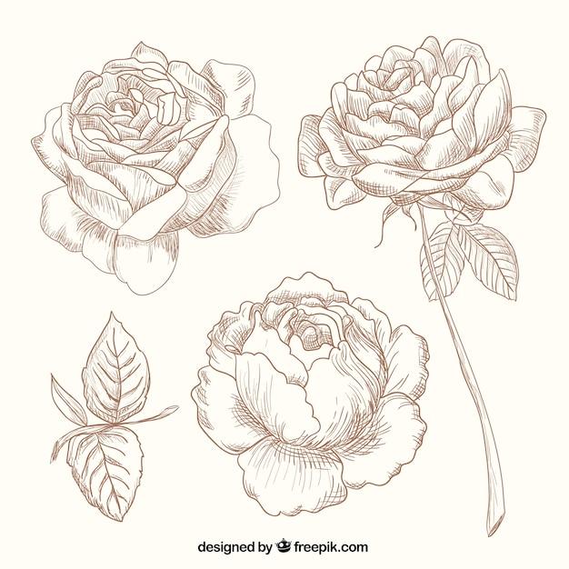 desenho rosas baixar vetores grátis