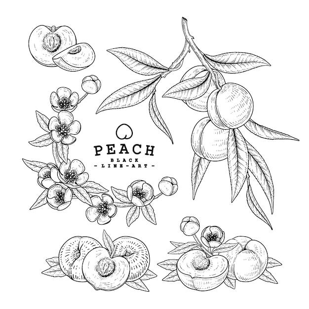 Desenho vetorial pêssego conjunto decorativo. ilustrações botânicas de mão desenhada. preto e branco com linha arte isolada. desenhos de frutas. elementos de estilo retro. Vetor Premium