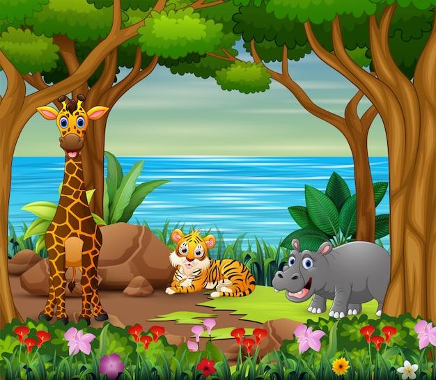 Desenhos animados de animais selvagens que vivem na bela floresta Vetor Premium