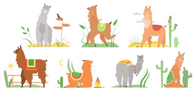 Desenhos animados ilustrações planas lama. personagens de alpaca lhamas bonitinho sorrindo, andando, pulando, dormindo na paisagem do deserto de peru com cactos. coleção de animais lama engraçado mexicano isolada no branco Vetor Premium