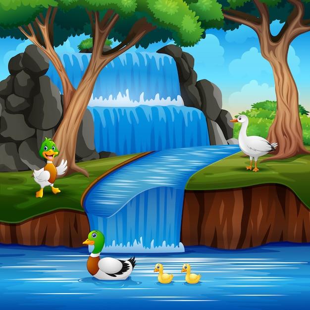 Desenhos animados muitos patos brincando na cachoeira Vetor Premium