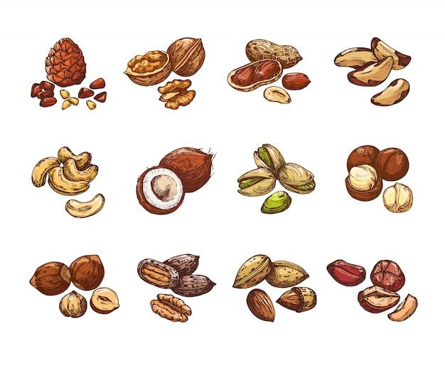 Desenhos animados nozes e sementes. avelã e coco Vetor Premium