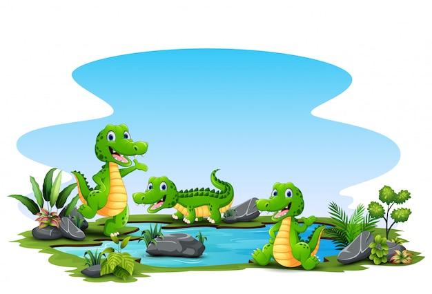Desenhos animados três crocodilo ao redor da lagoa pequena Vetor Premium