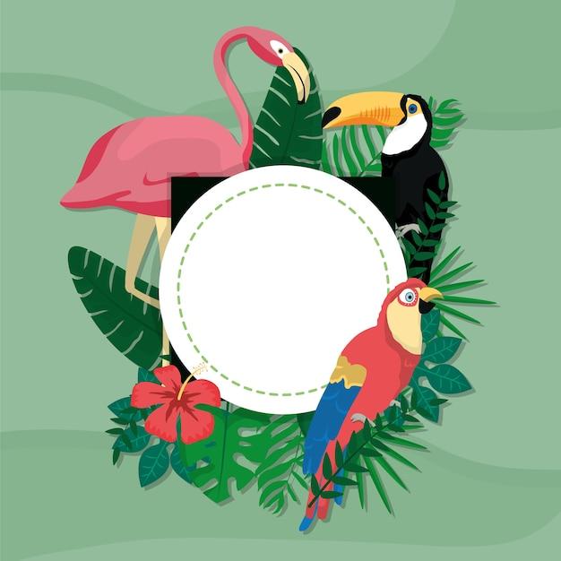 Desenhos de aves exóticas Vetor Premium