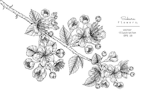 Desenhos de flor de cerejeira sakura Vetor Premium