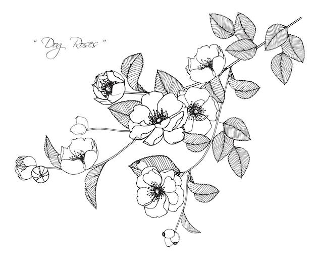 desenhos de flor rosa de cão baixar vetores premium