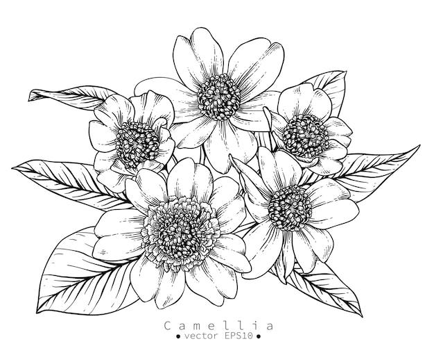 Desenhos de flores de camélia Vetor Premium