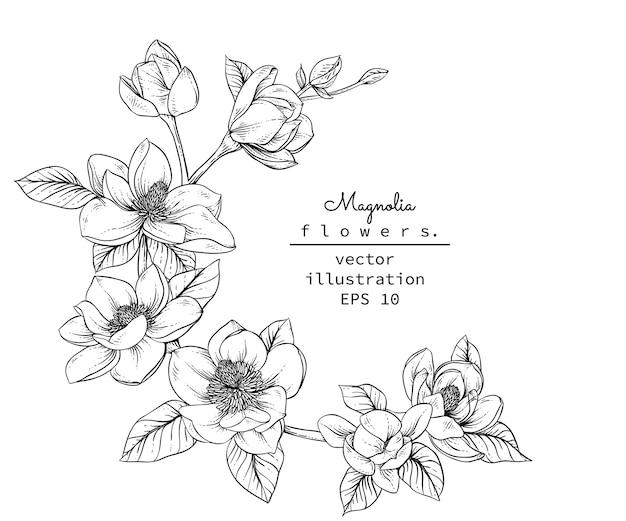 Desenhos de flores de magnólia. Vetor Premium