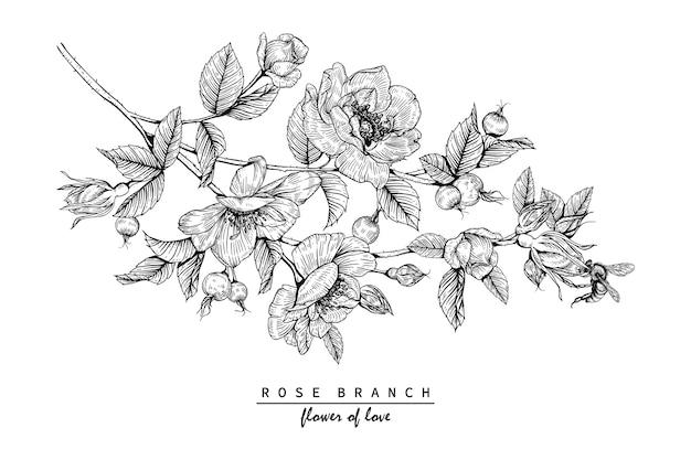Desenhos De Flores Rosa Vetor Premium