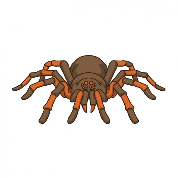 Design da aranha pintada à mão Vetor grátis