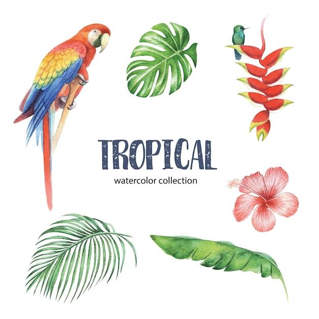 Design tropical com folhagem e flor. ilustração vetorial Vetor Premium