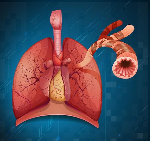 Diagrama mostrando o pulmão humano em fundo azul Vetor grátis