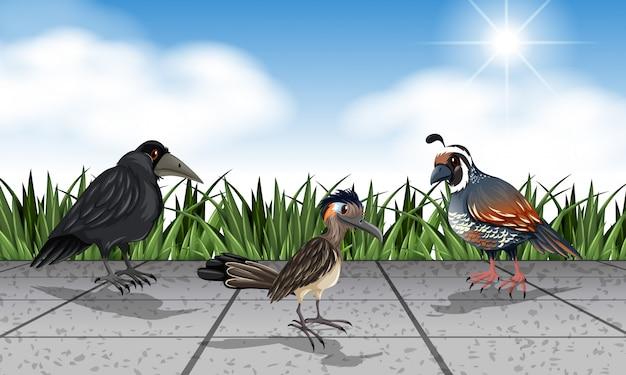 Diferentes aves selvagens na rua Vetor grátis